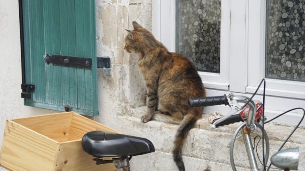 chat-ars-en-ré